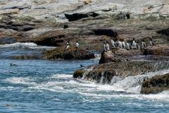 birds-seal-island-02b