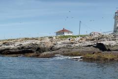 p-seal-island-bs-01