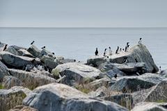 sel-island-birds-01
