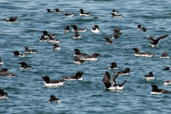sel-island-birds-03