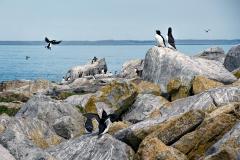 sel-island-birds-04